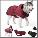 Best Winter Jackets For Dogs