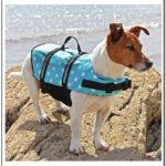 Dog Shark Life Jacket Canada