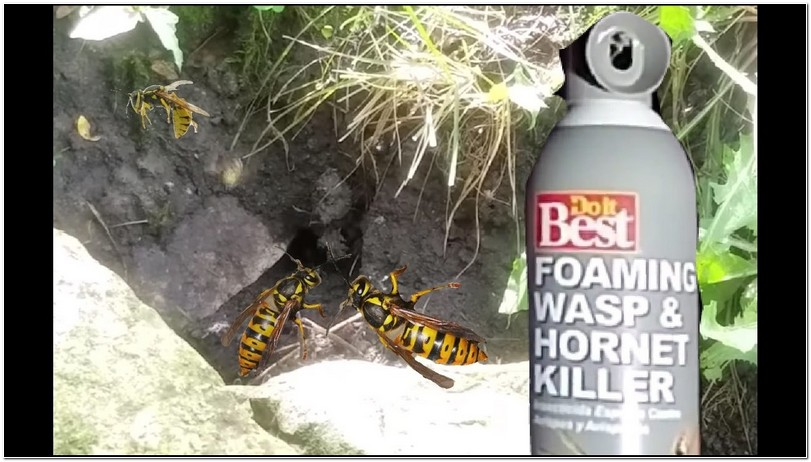 Getting Rid Of Yellow Jacket Nest In Wall