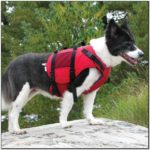 Salus Life Jackets For Dogs