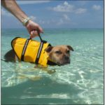 Xxl Life Jackets For Dogs