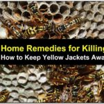 Yellow Jacket Repellent Essential Oils
